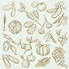 Set of Vintage Sketches Vegetables in Freehand Style