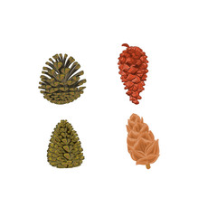 Four pine cones larch cones vector