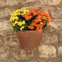 orange and yellow petunias flowers in pot on stone wall, Spello