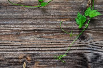 Hopfen Blatt Holz Hintergrund