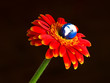Earth blooming from Gerbera flower