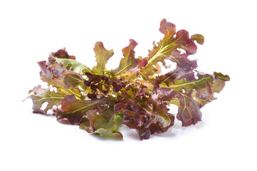 fresh red  lettuce leaves isolated on white