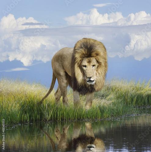 Fotobehang Leeuw Lion