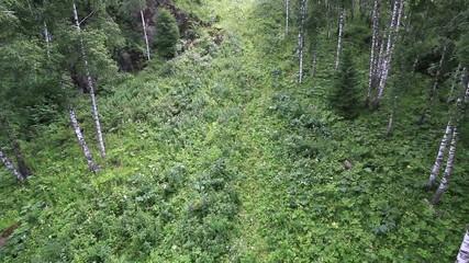 Beautiful vegetation on the hillside of Mount Shallow Sinyuha.