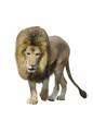 Walking Lion