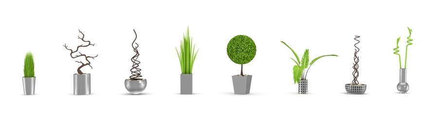 Decorative plants isolated on white.