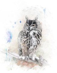 Watercolor Image Of  Owl