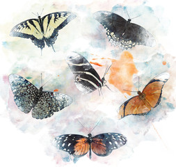 Watercolor Image Of  Butterflies
