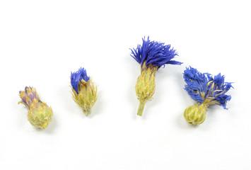 Reihe Kornblumenblüten (getrocknet)