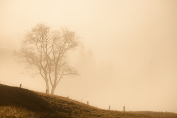 Lonely tree at foggy morning