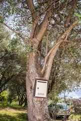 Mailbox on olive tree