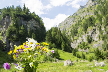 Wild flowers of the mountain