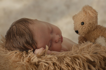 Teddy beobachtet Baby