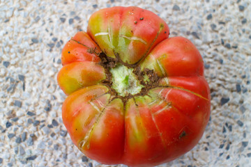 tomatoe red