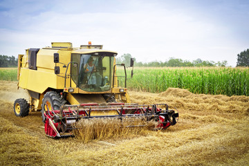 Combine harvests wheat on a field