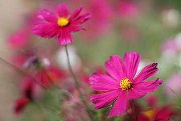 Pinkable