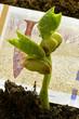 Jack and the Beanstalk Jaakko ja pavunvarsi 잭과 콩나무