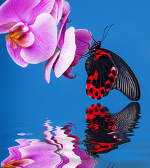 exotic butterfly sitting on an orchid blue background