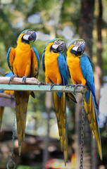 bright blue parrots macaw