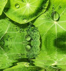 a background from green dewy leaves