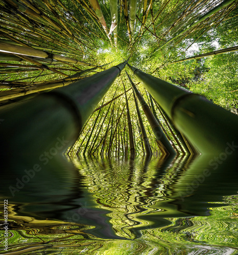 Foto op Aluminium Bamboe bamboo forest - fresh bamboo background