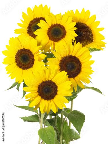 Aluminium Zonnebloemen Sonnenblumen