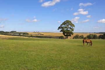 yorkshire wolds farmland
