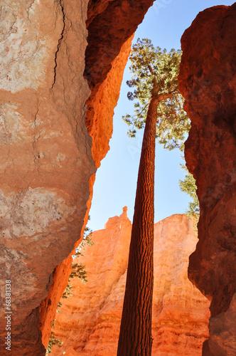 Fotobehang Canyon Bryce Canyon National Park, Utah
