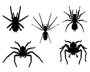 Black silhouettes of spiders, vector
