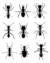 Black silhouettes of ants, vector