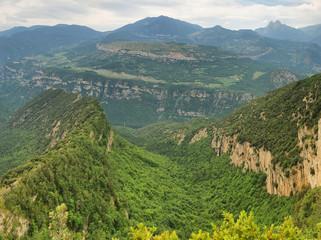 Landscape of beech forest