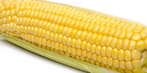 Fresh corn on the cob