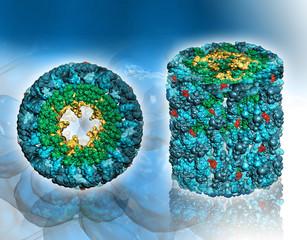 Protein molecule – Hemocyanin