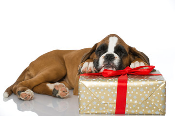 Welpe mit Weihnachtsgeschenk