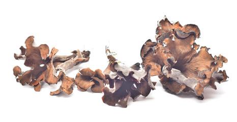 craterellus cinereus