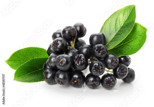 black ashberry isolated on the white background - 68387517