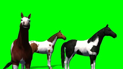 Horses in a group - green screen