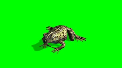 frog sits and eats - green screen