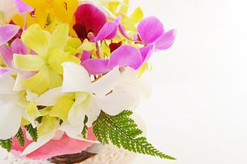 蘭の花 デンファーレ