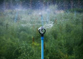 water splashing from outdoor garden splinkler