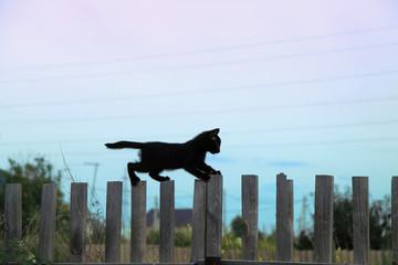 black kitten on a fence