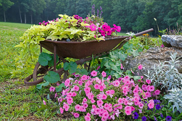 Wheelbarrow with Flowers
