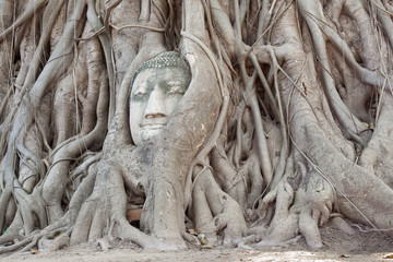 tête de bouddha,  wat phra mahathat, Thaïlande