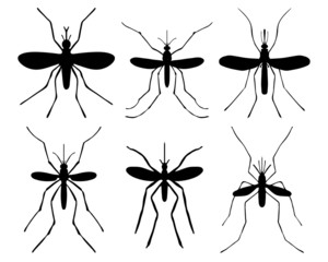 Black silhouettes of mosquito, vector