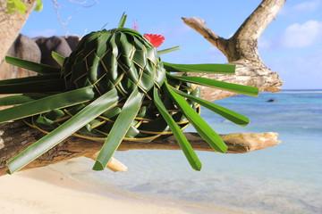 Chapeau tropical aux Seychelles