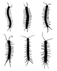 Black silhouettes of  millipedes, vector
