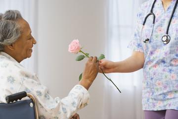 Nurse giving senior African woman in wheelchair a rose