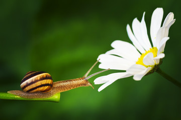 Snail and daisy grass