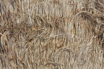 Texture - tree bark. Beauty tree bark of palm.