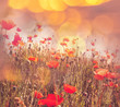 canvas print picture - Poppy